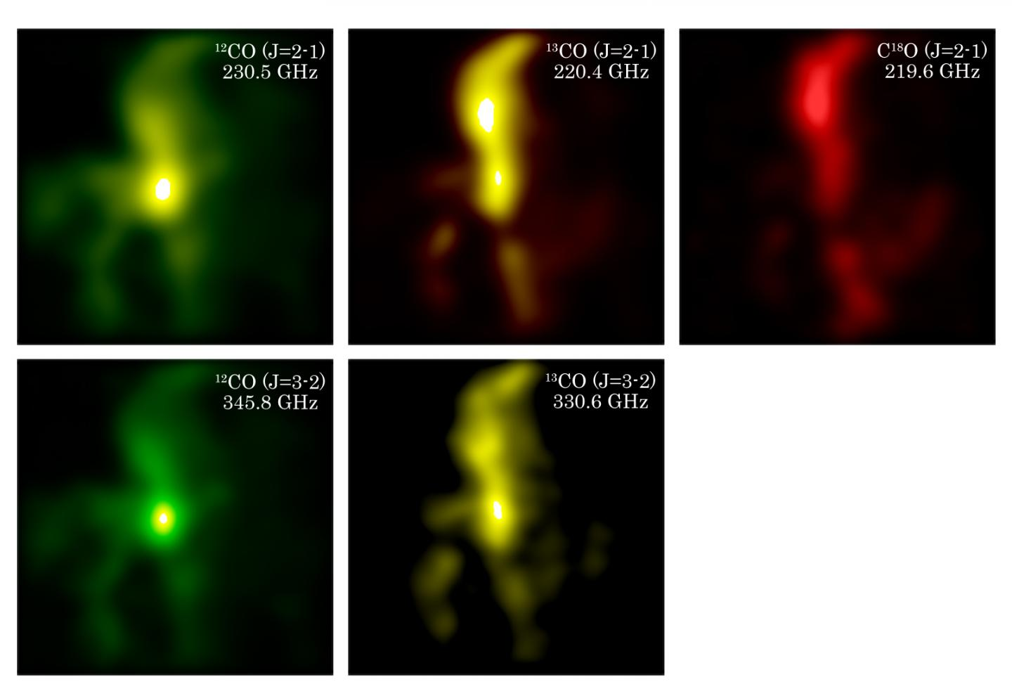 Distribution of CO isotopologues in the Orion molecular cloud