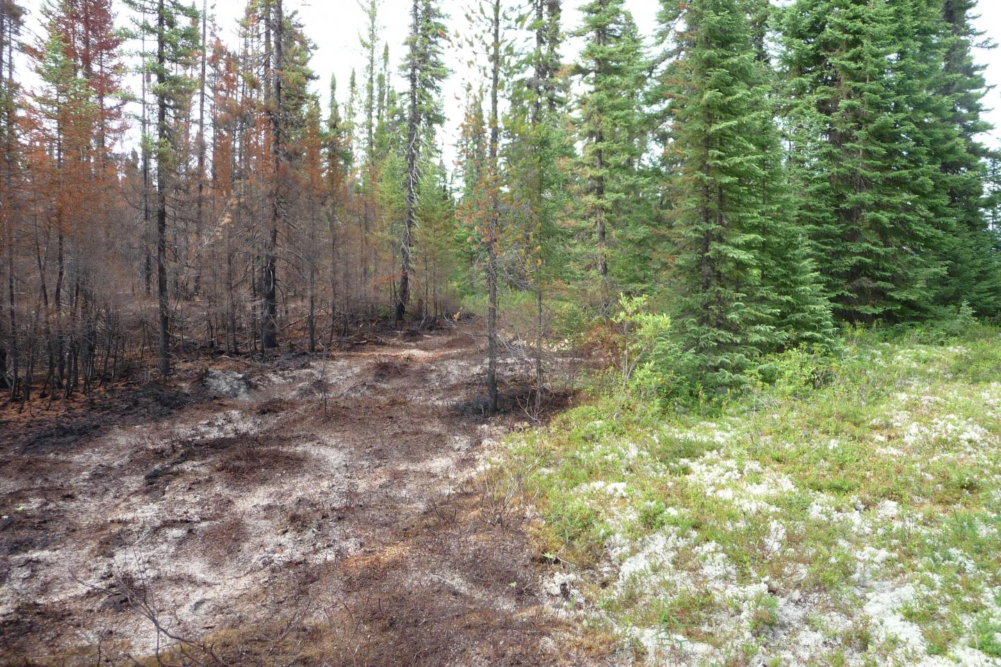 Boundary of a Recent Low-Intensity Stand-Replacing Fire
