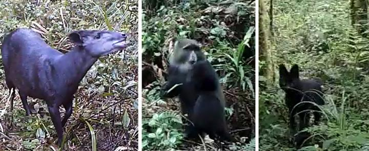 Mount Kilimanjaro Animals
