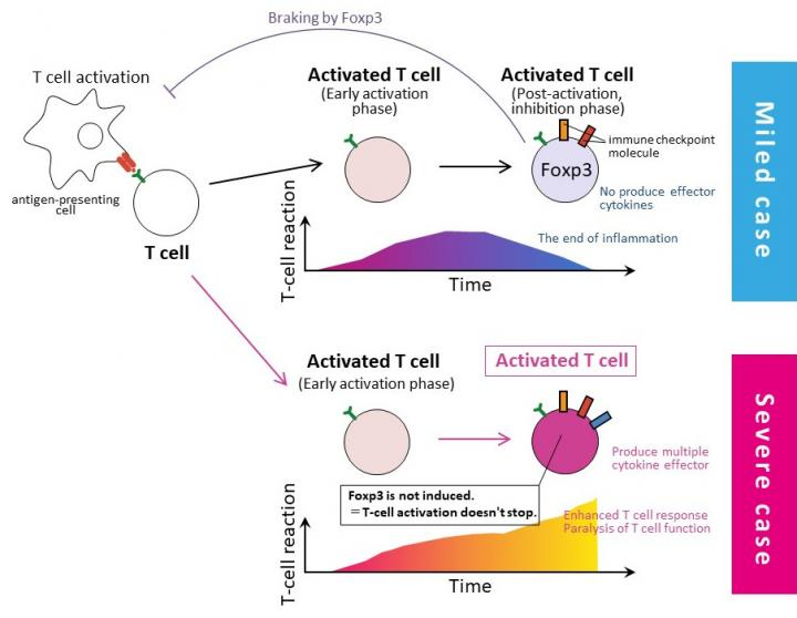 Proposed immunological mechanisms of severe COVID-19