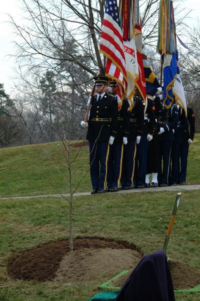 Moon Tree at Arlington Cemetery