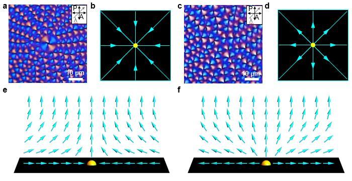 Polarizing Optical Microscopy Images