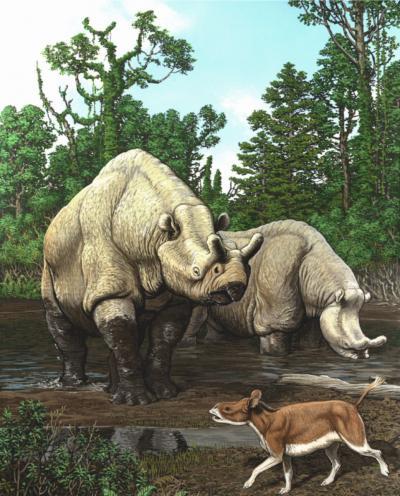 Rhino-Like Animals