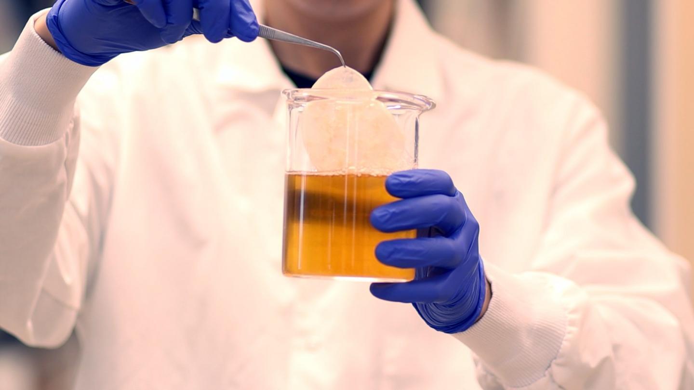 Kombucha Tea Sparks Creative Materials Research Solution