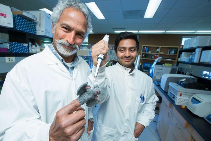 Bat 'Super Immunity' May Explain How Bats Carry Coronaviruses