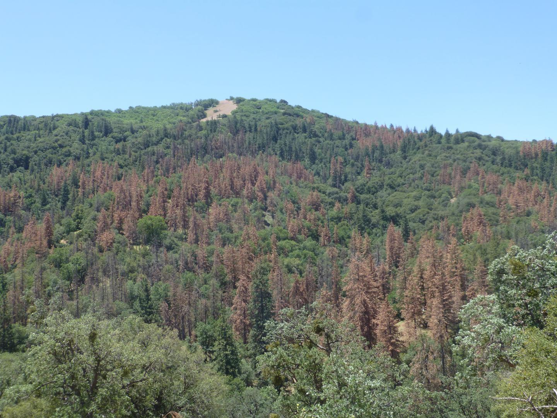 Clark Drought Trees