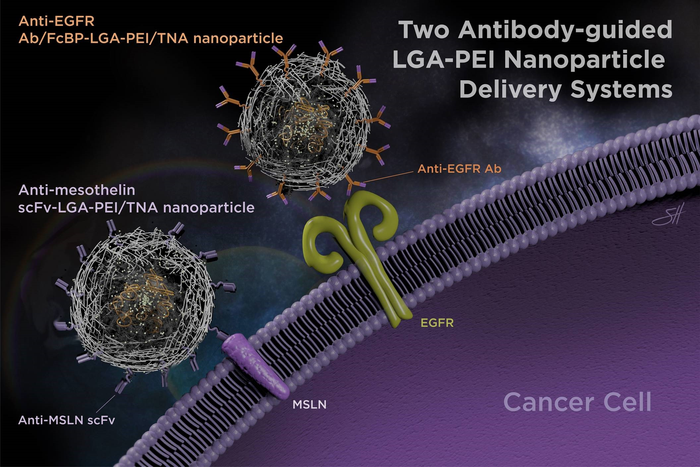 Antibody-guided nanoparticle delvery system