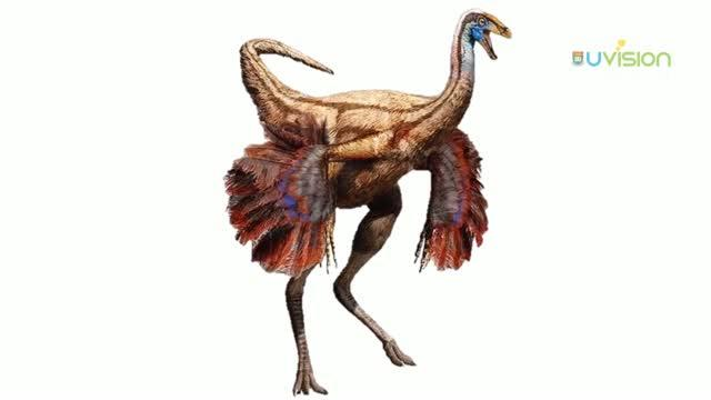 What Color Were Fossil Animals