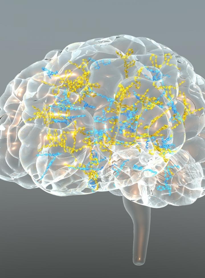 Transcribed Noncoding Elements in the Brain