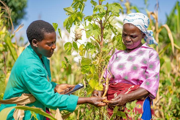 Plant doctor helps farmer with her crop pest and disease issue