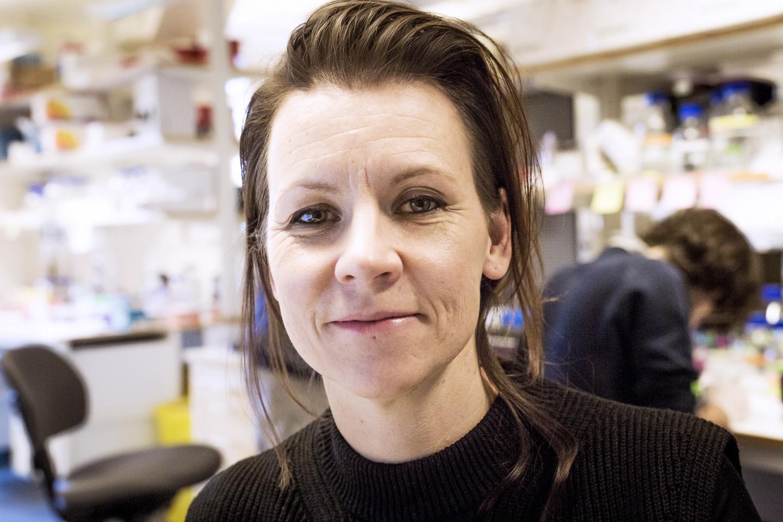 Marie Carlén, Karolinska Institutet