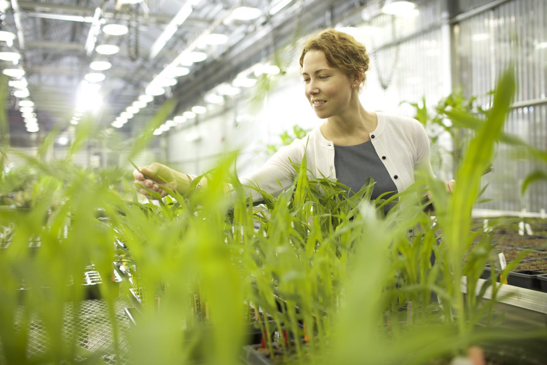 Andrea Eveland, Ph.D., Donald Danforth Plant Science Center