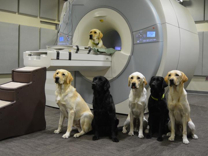 Service Dog Trainees