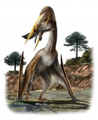 Pterosaur illustration