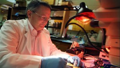 Dr. David Pollock, Medical College of Georgia at Georgia Regents University