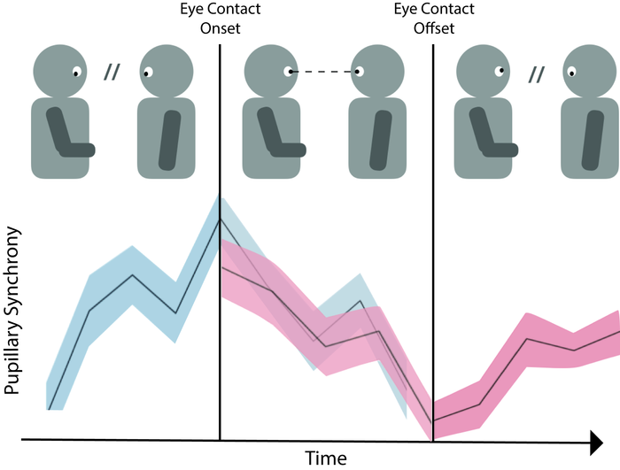Eye contact coincides with pupillary synchrony
