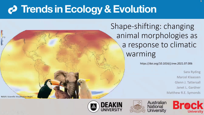 Changing animal morphologies as a response to climatic warming
