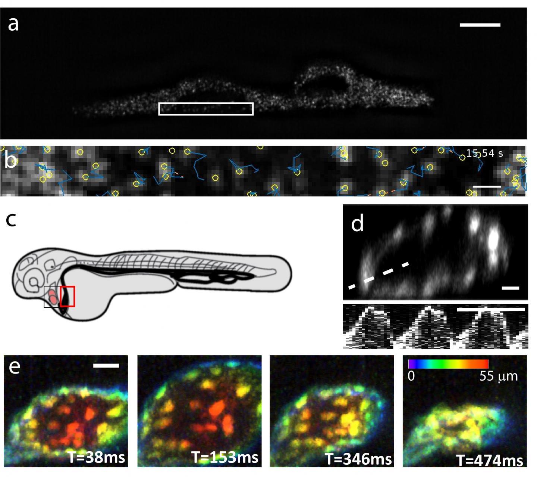 ASLM and 2-Photon Microscopy