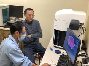 Researchers study recurrent neural network structure in the brain - EurekAlert