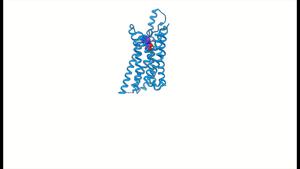 Activation of the human adenosine A1 receptor