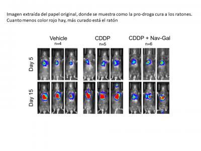 A New Compound Removes Senescent Cells and Reduces Toxicity in Cancer Treatment
