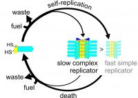 Life cycle of complex and simple replicators