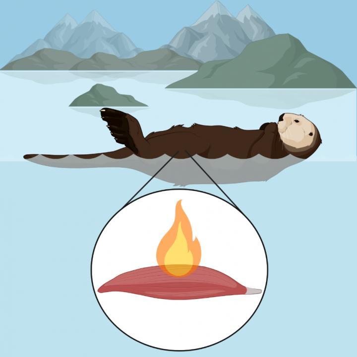 OtterBiorender