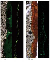 Microscope Images of Rock Collected from 122 Meters Beneath Seafloor