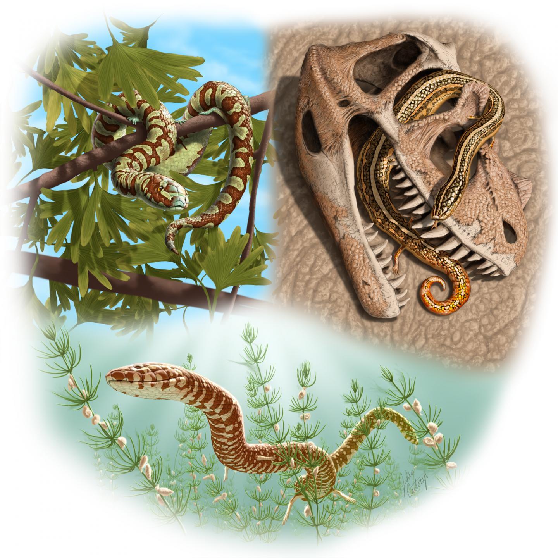 Paleo Reconstructions