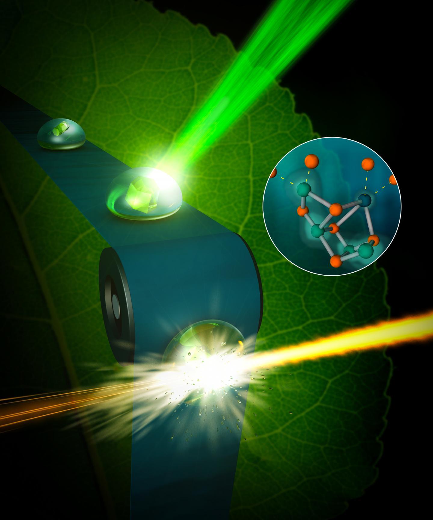 Photosynthesis II Graphic