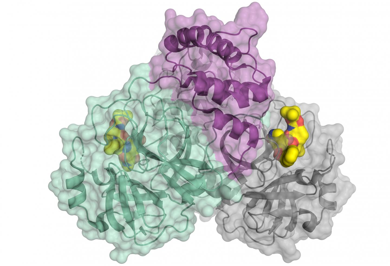 Main Protease of SARS-CoV2