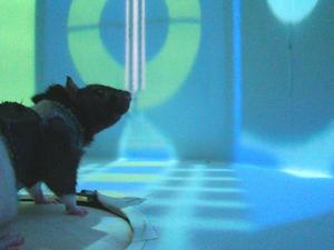 Animal in VR maze