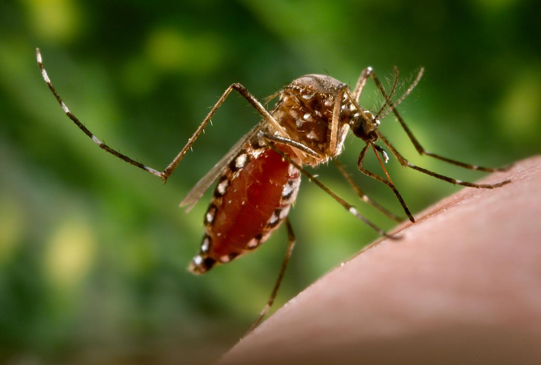 A Step Towards Understanding Zika