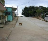 A Street in the Mexican City after the Road Surface Was Laid