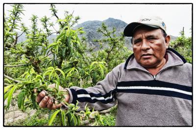 A Peach Grower in Peru