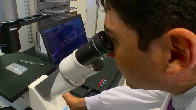 Kidney Organoids in Renal Disease Study