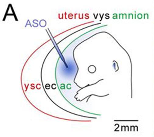 Transuterine Microinjection