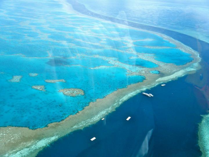 Multiple Communities, One Reef (2 of 2)