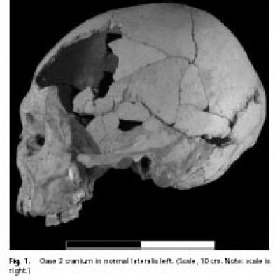 Oase 2 Cranium in Norma Lateralis Left