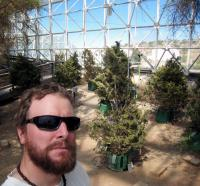 Biosphere 2 Pine Experiment -- Long Monitoring Shifts