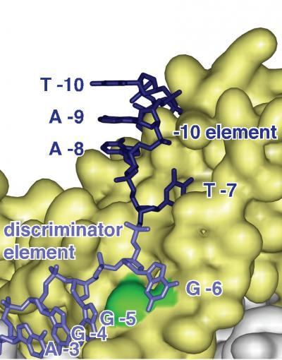 Discriminator Element (1 of 2)