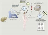 Extraction of miRNA from Brain Exosomes