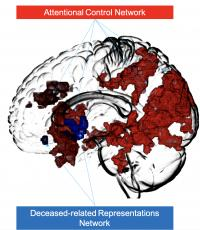 Figure 4: The Brain Networks Respectively Involved in Controlling Attention