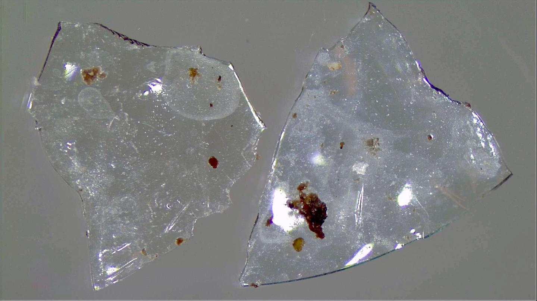 Contact Lenses in Sewage Sludge