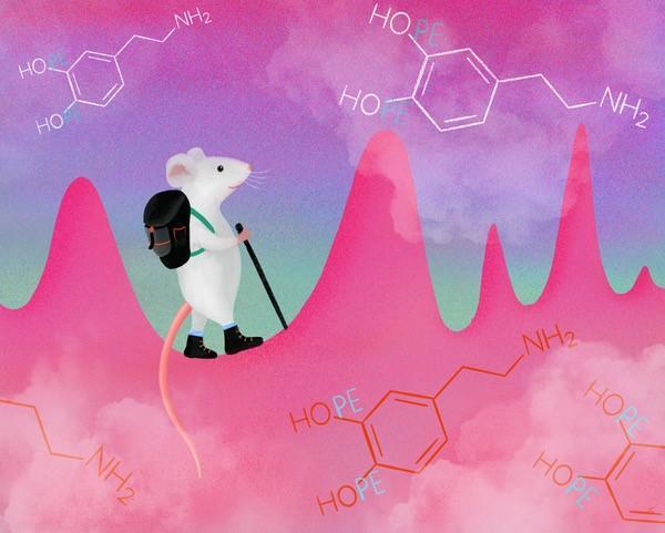 Spontaneous dopamine pulses