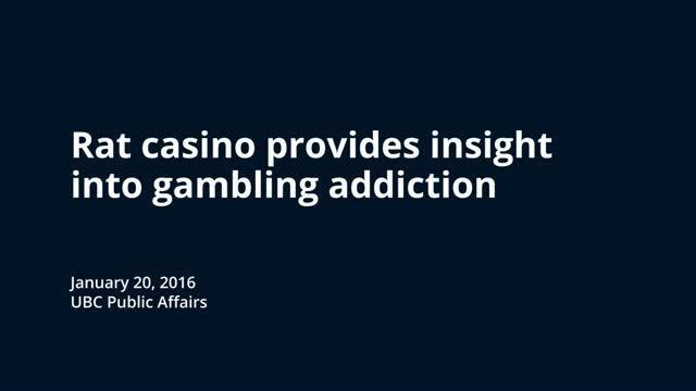Rat Casino Provides Insight Into Gambling Addiction