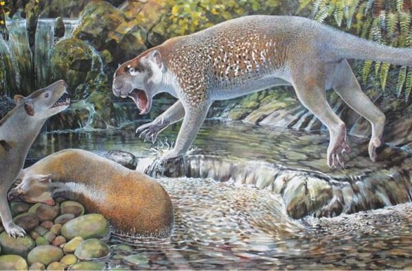 Reconstruction of <i>Wakaleo schouteni</i> Challenging the thylacinid <i>Nimbacinus dicksoni</i>