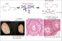 Inhibition of the C19ORF57 Gene Causes Male Specimens to Become Infertile