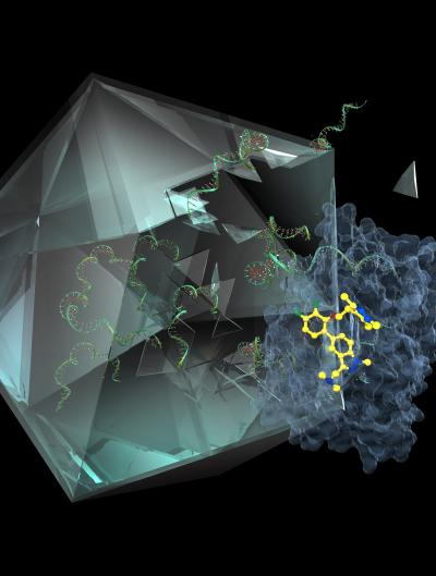Illustration of the Molecule