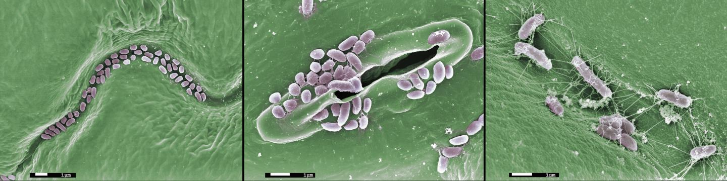 Key Research Priorities for Agricultural Microbiomes Identified